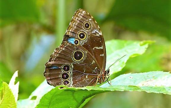 Darien Jungle shows off its beautiful flora and fauna