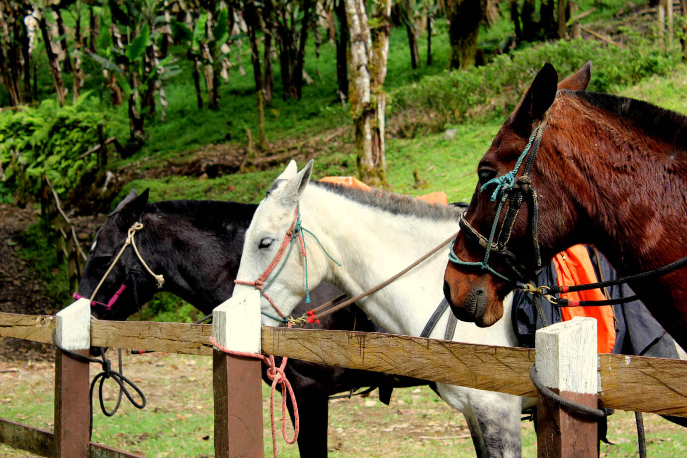 Monteverde Costa Rica guided Horseback riding tour horses tied up and waiting for guests