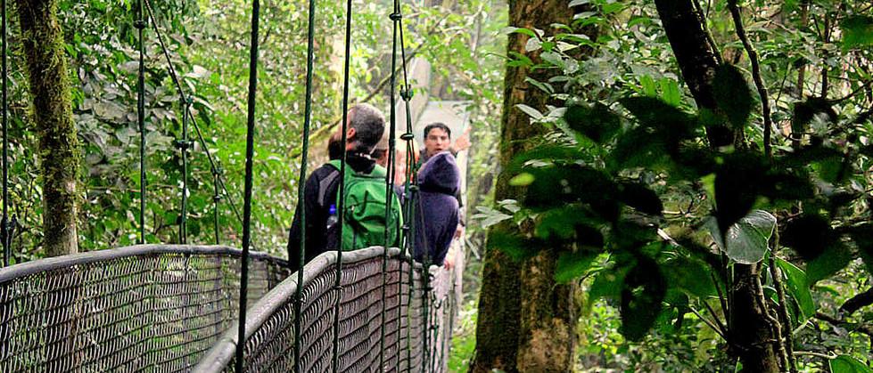 Monteverde Costa Rica canopy sky walk adventure guests on hanging bridge enjoying the views