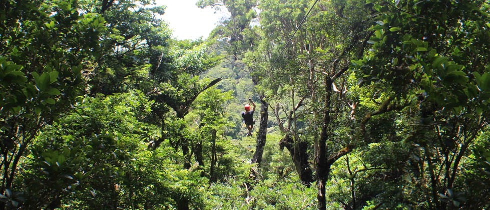 Monteverde Costa Rica zipline adventure guest zipping superman style with arm raised in greeting in lush nature rainforest