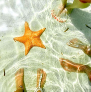 San Blas Natural Pools sea star