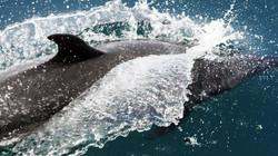Panama adventure cruise with dolphin