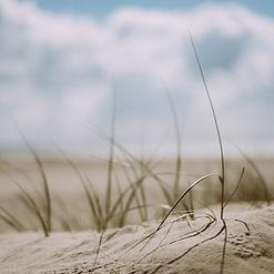 beach-1866823.jpg