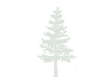 pine-tree-png-10785 copy_edited_edited_e