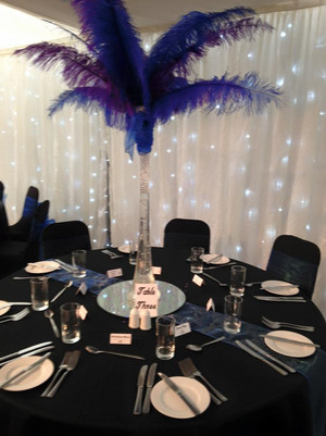 Large Ostrich Feather Display