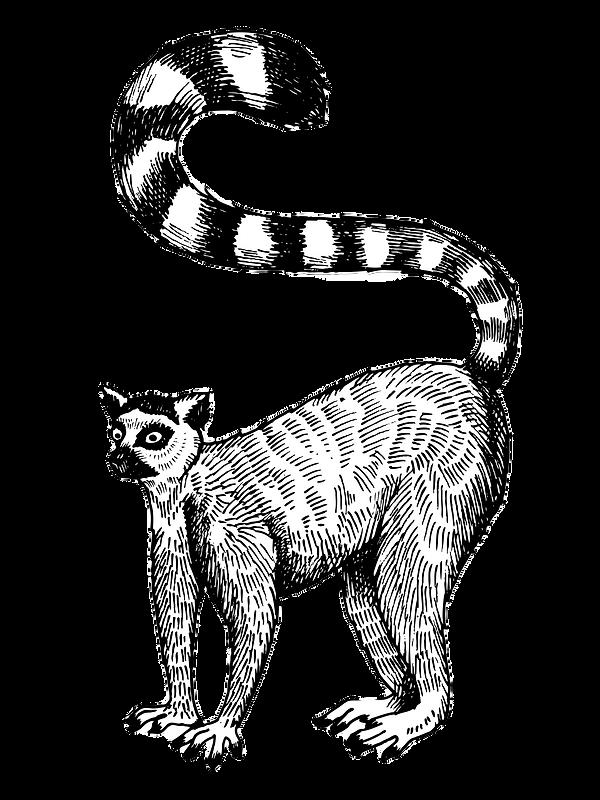 Lemur-Test_edited.png
