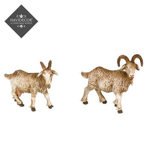 Conjunto 2 cabras Oliver