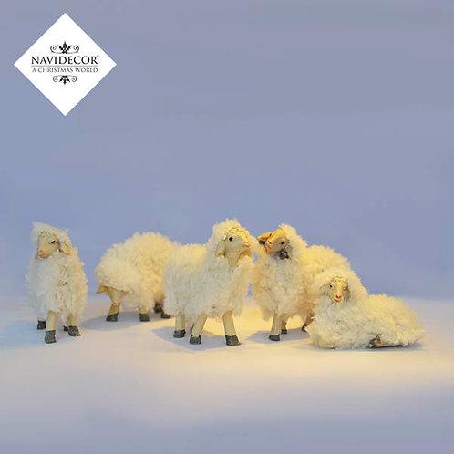 Conjunto de ovejas