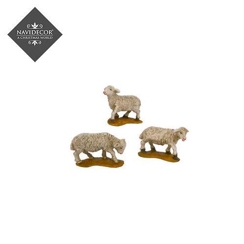 Oliver conjunto de ovejas