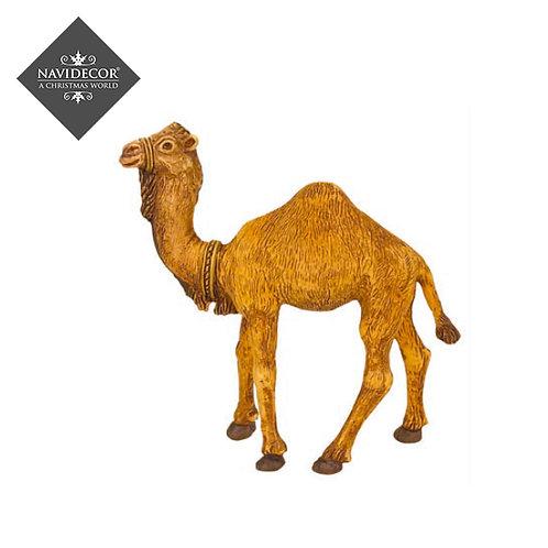 Oliver Camello 8cm