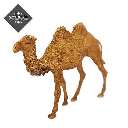 Camello Martino Landi