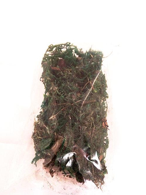 Bolsita musgo verde