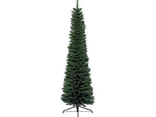 Pencil pine