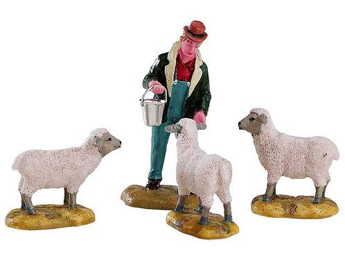 Alimentando ovejas