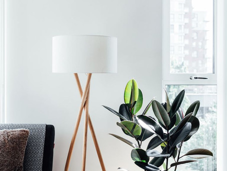 6 ways to make your home more Biophilic friendly