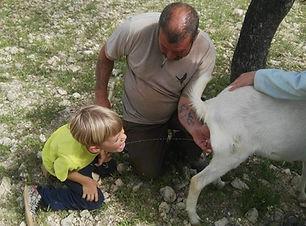 Niño bebiendo leche de la cabra.jpg