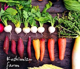 小清水農園の無農薬野菜