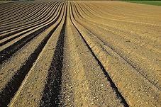 crop-1149914_1920.jpg