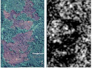 Deforestation is on the radar!