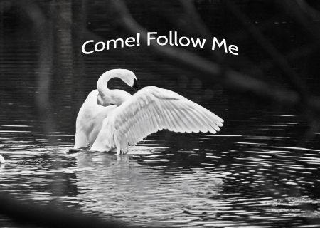 Come Follow me_thumb.jpg