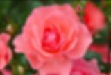 꽃1.png
