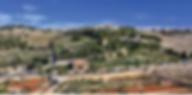 올리브산.png