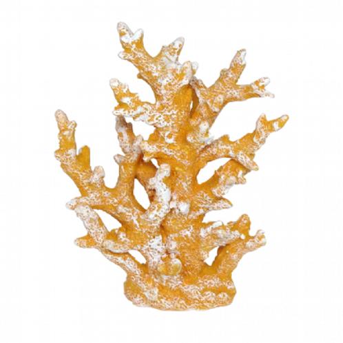 Coral Laranja