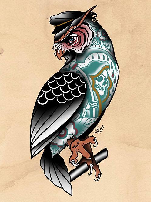 Owl - Seabird