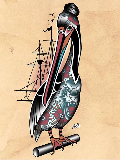 Pelican - Seabird