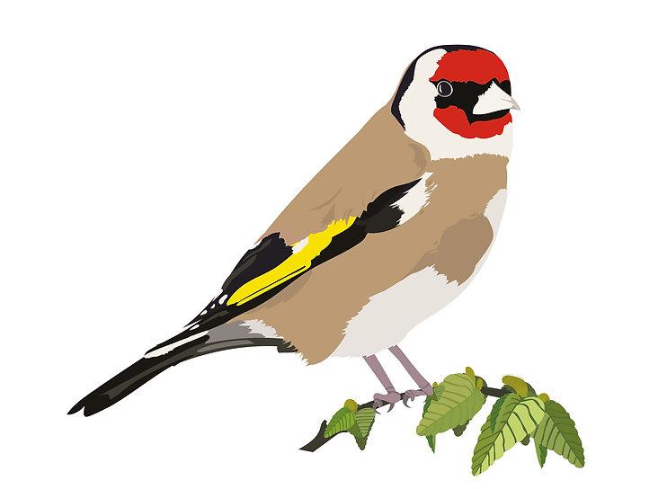 mr goldfinch