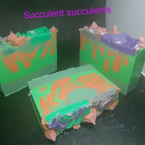Succlent Succulents