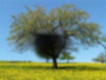 Visione occhio affetto da maculopatia