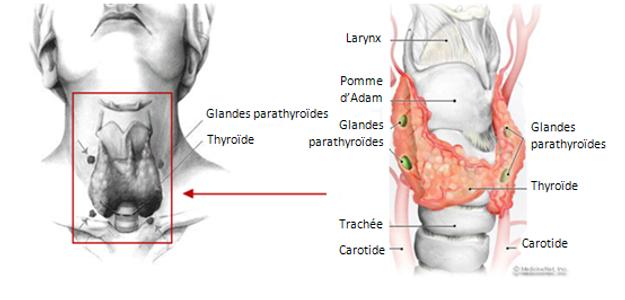 Partial Thyroid Surgery