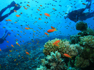 Scuba diving and the risks for the ENT sphere