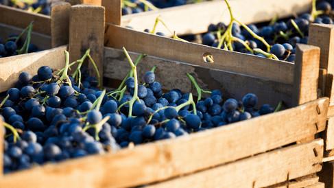 fotografo-per-vinicoltori-langhe-piemont