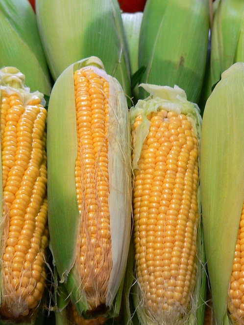 Cooked Corn 2 pack