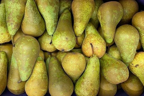 Pears 6 pack