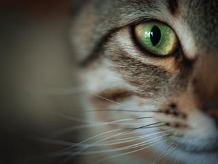 The Truth About Cats - Understanding Normal Feline Behavior