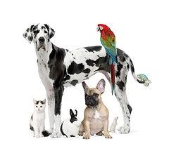 Dogs, cat, rabbit and bird