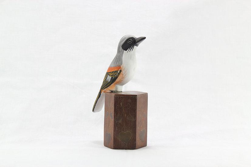 Papier Mâché - Long Tailed Shrike