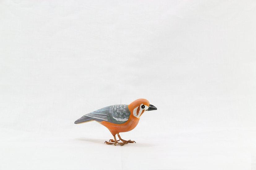 Papier Mâché - Orange Headed Thrush