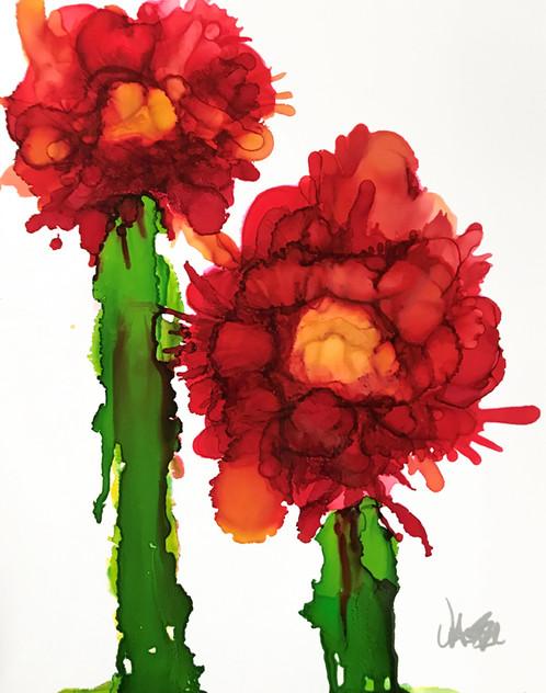 Peekaboo Cactus