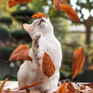 Whiteys erster Herbst