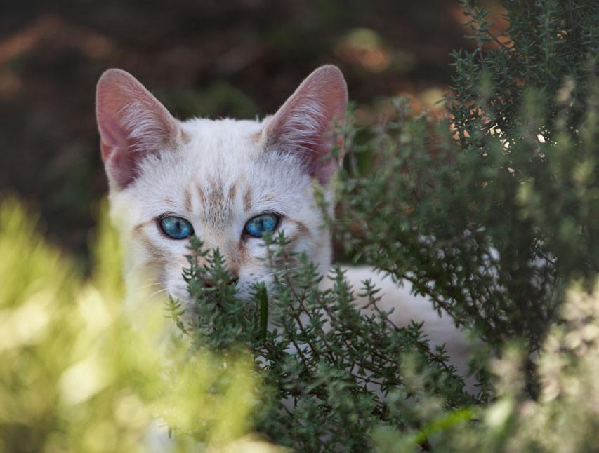 Blaue Augen zum verlieben