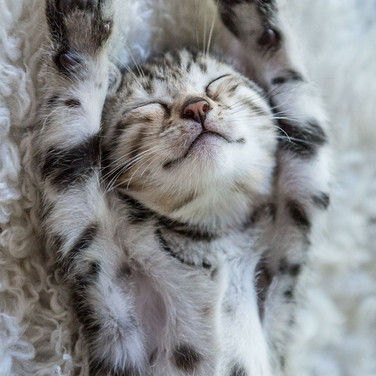 Total relaxed