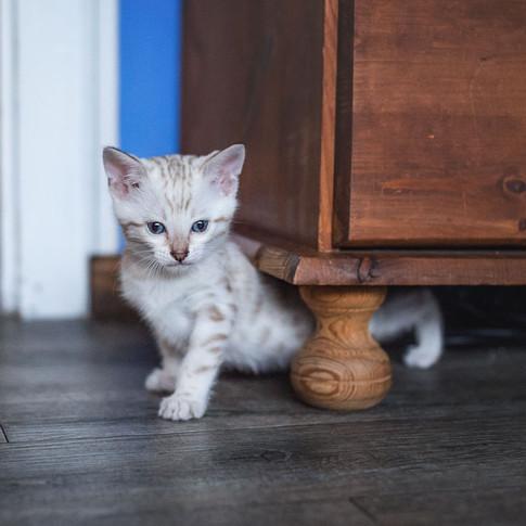 Auch unter den Möbeln