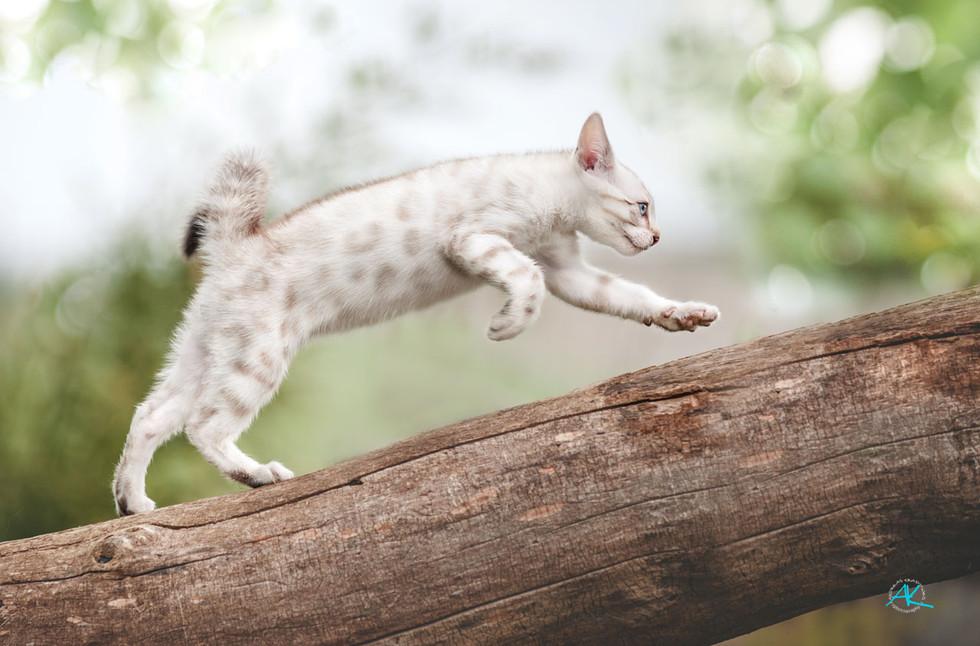 Fly's Kitten haben jede Menge Power
