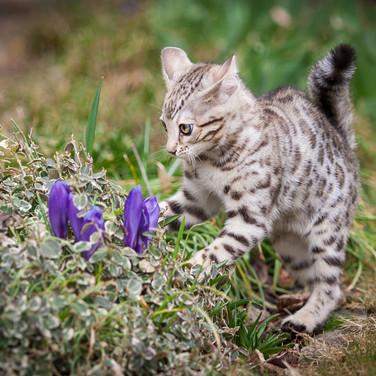 Blumen entdeckt