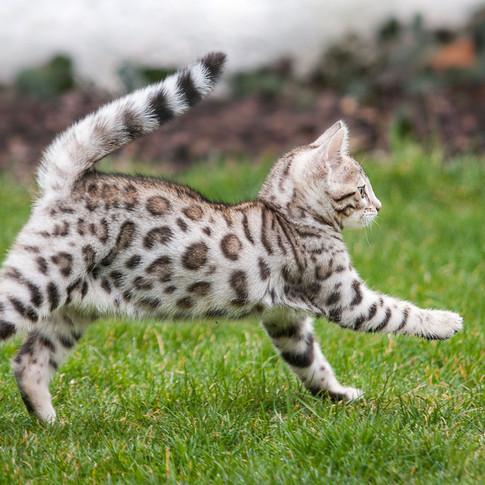 Kitten Galopp