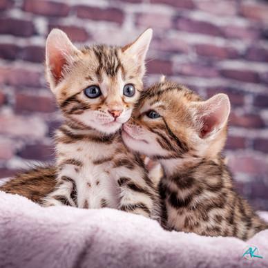 Lily's Kitten